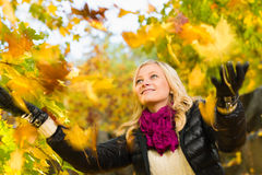 Falling leaves Stock Photography