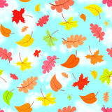 Falling leaves across the blue sky eamless pattern Stock Photos