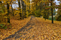 Falling leaves and alley in autumn Royalty Free Stock Images