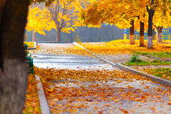 Falling leaves in the alley Royalty Free Stock Photography