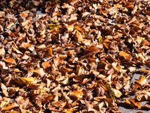 Falling leaves in autom cover the ground. All over stock image