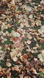 Falling leaves. In the automn park Royalty Free Stock Photography