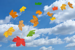 Falling leaves in autumn. Against cloudy sky royalty free stock photos