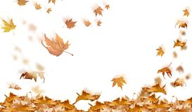Falling leaves in autumn background isolated space for your text. Falling leaves in autumn background isolated in white space for your text Royalty Free Illustration