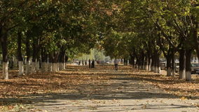 Falling leaves of autumn. In the city stock footage