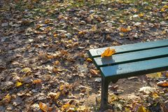 Falling leaves. Autumn in city Park in yellow leaves. royalty free stock photo