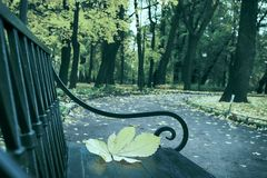 Falling leaves. Autumn in city Park in yellow leaves. Yellow maple leaves on garden bench, sad mood of past summer stock photos