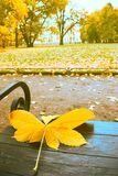 Falling leaves. Autumn in city Park in yellow leaves. Yellow maple leaves on garden bench, sad mood of past summer royalty free stock photography