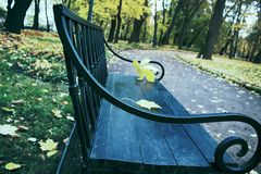 Falling leaves. Autumn in city Park in yellow leaves. Yellow maple leaves on garden bench, sad mood of past summer royalty free stock images