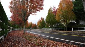 Falling leaves and autumn colors near George W. Otten Park of Bethany. Portland, Oregon/USA-10 09 2018: Falling leaves and autumn colors near George W. Otten stock video footage