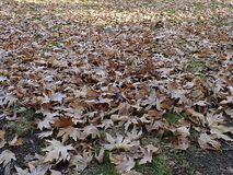 Falling leaves in autumn, dry tree leaves, sitting on the bank, pictures of park scenes in the fall, Stock Photography