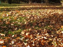 Falling leaves in autumn, dry tree leaves, sitting on the bank, pictures of park scenes in the fall, Royalty Free Stock Image