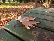 Falling leaves in autumn, dry tree leaves, sitting on the bank, pictures of park scenes in the fall, Royalty Free Stock Photography