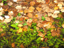 Falling leaves. Autumn leaf fall in park Royalty Free Stock Photo