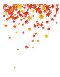 Falling leaves background. Royalty Free Stock Images