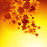 Falling leaves background Royalty Free Stock Photography