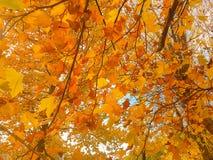 Falling leaves. A beautiful autumn scenery. stock photo