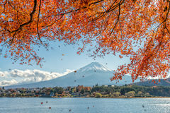 The falling leaves. Beautiful maple Momiji leaves falling with the mountain Fuji in the background Stock Photos