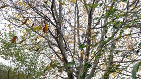 Falling leaves. A beautiful picture with falling leaves royalty free stock photography