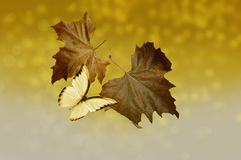 Falling leaves with butterfly. Autumn: Falling leaves with butterfly Stock Photo