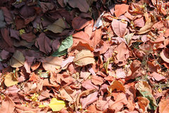 Falling leaves Royalty Free Stock Photos