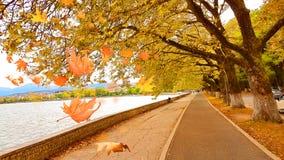 Falling leaves in Ioannina city lake Pamvotis Epirus Greece Royalty Free Stock Photography
