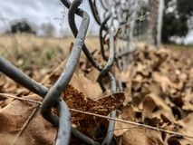 Falling leaves by the fence stock photos