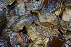 Falling leaves in forest Stock Image