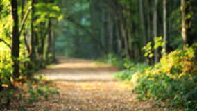 Falling leaves, forest, landscape, autumn. Falling leaves in autumn forest, beautiful landscape with road and avenue of trees stock footage