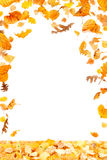 Falling Leaves Frame. Autumn leaves frame on white background Royalty Free Stock Image