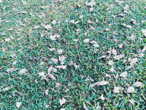Falling leaves in the garden. Season's changing summer to fall Royalty Free Stock Photo