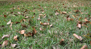 The falling leaves in the grass Stock Photo