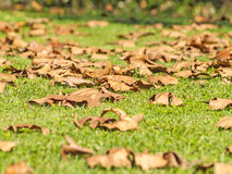 Falling leaves on the grass on autumn. In Spain stock images