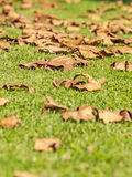 Falling leaves on the grass on autumn. In Spain royalty free stock photos
