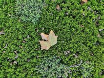 Falling leaves. Green inclusive yellow,Falling leaves,but,can`t land royalty free stock images