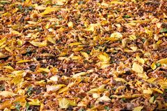 Falling leaves on the ground. Autumn season royalty free stock photography