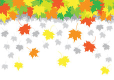 Falling leaves of a maple. On a white background Stock Photography