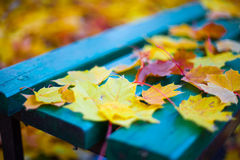 The falling leaves. The falling maple leaves on the colorful bench Stock Photos