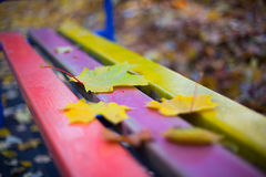 The falling leaves. The falling maple leaves on the colorful bench Royalty Free Stock Photos