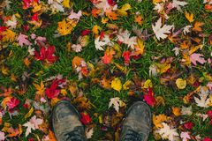 Falling leaves at my feet Stock Photo