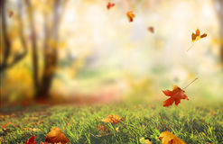Falling  leaves natural background . Stock Photography