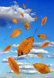 Falling leaves over blue sky Stock Photos