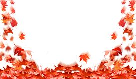 Falling leaves red  autumn background isolated in white space for your text. Falling leaves red wind  autumn background isolated in white space for your text royalty free stock image