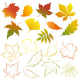 Falling leaves set Stock Photos
