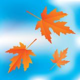 Falling leaves on sky background Stock Photo
