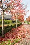 Falling leaves of the trees. In a street there are many falling leaves of the trees stock image