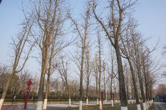 Falling leaves of trees in winter. Trees with falling leaves in winter, taken in Hexi Binjiang Park, Nanjing, Jiangsu royalty free stock photo