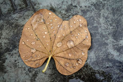 Falling Leaves with water drops. Falling Leaves on the ground stock photography
