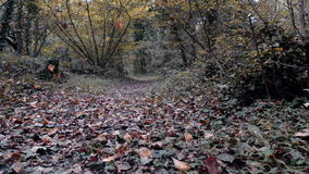 Falling leaves in the Woods. stock video footage