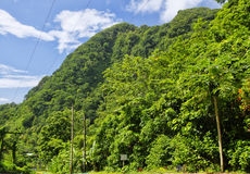 Falling lianas, Dominica stock images